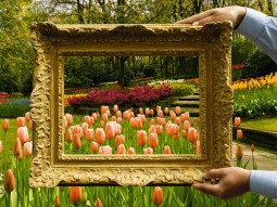 Keukenhof-featured